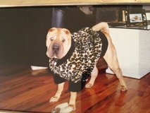 XL Leopard Faux Fur Dog Coat in Naperville, Illinois