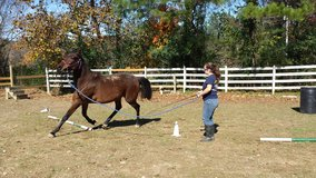 Horse Training/Gentling in Dover, Tennessee