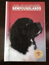 Newfoundlands in St. Charles, Illinois