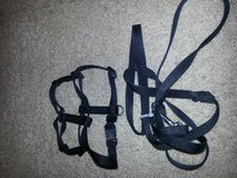 small harness and leash in Fort Campbell, Kentucky