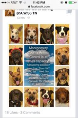 ADOPTIONS NEEDED! At ANIMAL CONTROL , FULL CAPSCITY!!hours til 7pm on Thurs in Fort Campbell, Kentucky