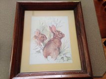 Rabbit Picture in Naperville, Illinois