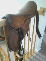 English Saddle in Wheaton, Illinois