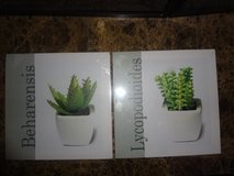 Plant picture frames in The Woodlands, Texas