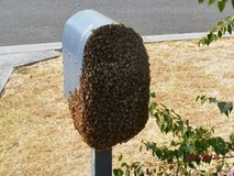 Honey for swarm of bees in Fort Campbell, Kentucky