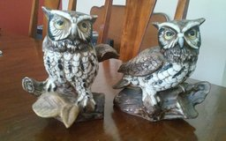 Owls on logs in Conroe, Texas