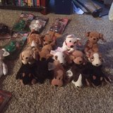 Beanie Baby Dogs in Bellaire, Texas