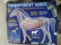 TRANSPARENT HORSE MODEL in Joliet, Illinois