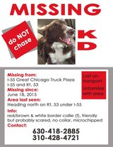 KD..Missing Reward If Found.Owner lives out of state wants her home. in Naperville, Illinois