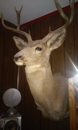 Deer Mount in Alamogordo, New Mexico
