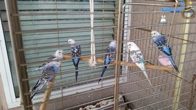 Beautiful parakeets in Fort Bliss, Texas