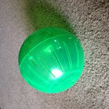 Ferret exercise ball in Clarksville, Tennessee