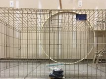 Midwest Zinc Gold Exercise Pen and Cover in Beaufort, South Carolina