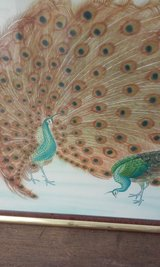 Peacock Picture in Alamogordo, New Mexico