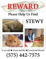 Please help me find my buddy Stewy!!! in Alamogordo, New Mexico