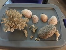 Aquarium/fish decor - shells, coral, white bottom gravel in Naperville, Illinois