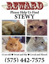 Help to find my Stewy cat in Alamogordo, New Mexico