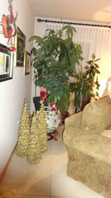 SET OF 3 TREES in Ramstein, Germany