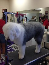 Pup Couture Dog Grooming in Alamogordo, New Mexico