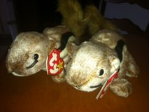 """TY """"CHIPPER"""" BEANIE BABY TUSH TAG ERROR NOT LOOPED in Cherry Point, North Carolina"""