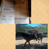horse mare wt saddle in DeRidder, Louisiana