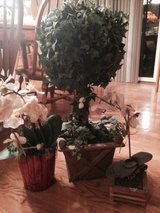 Topiery & faux orchids in Aurora, Illinois