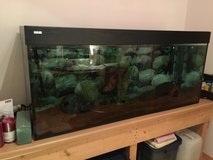 Large 120 Gallon Fish Tank in Grafenwoehr, GE