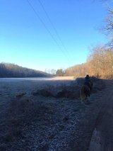 New Years Day Trail Ride in Dover, Tennessee