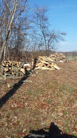 Firewood in Cadiz, Kentucky