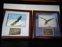 Inspirational Eagle Pictures in Fort Lewis, Washington