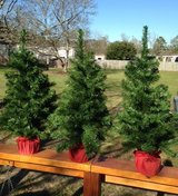 Artificial Trees in Kingwood, Texas