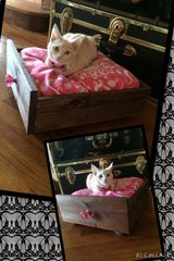Small Pet Bed in Fort Leavenworth, Kansas
