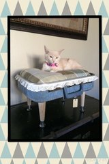 Small Pet Bed #2 in Fort Leavenworth, Kansas