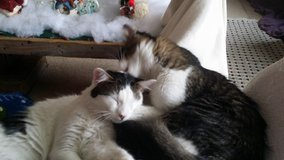 2 Loving Brothers Need A Great Loving Home in Conroe, Texas