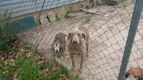 Dogs need a loving home in Fort Polk, Louisiana