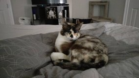 Beautiful cat for a good home in Tyndall AFB, Florida