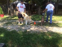 Dog training services in Fort Leonard Wood, Missouri