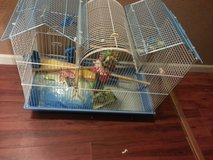 Parakeet Cage and Accessories in Fort Leonard Wood, Missouri