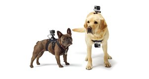 Go Pro Fetch Dog Harness in Los Angeles, California