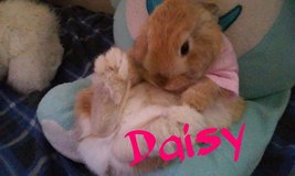 Adorable Daisy is looking for a good home! in Alamogordo, New Mexico