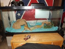 2 Bearded Dragons and Full Cage in Lawton, Oklahoma