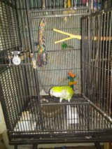 Quaker Parrot with large cage in Leesville, Louisiana