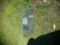 live coon trap in Fort Polk, Louisiana