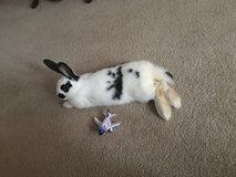 Bunny with cage and supplies in Quantico, Virginia