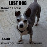 $500 REWARD Lost Chihuahua named YoYo in Roman Forest wearing a green sweater in Cleveland, Texas