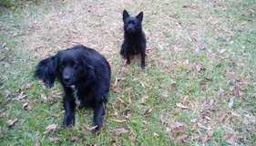 Two sweet and loving dogs in Kingwood, Texas