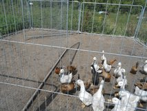 DOG OR POULTRY PENS in Lakenheath, UK