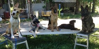 Professional Dog Training Services in Lake of the Ozarks, Missouri