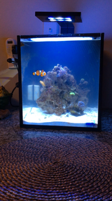 10 gallon innovative Nuvo aquarium in Joliet, Illinois