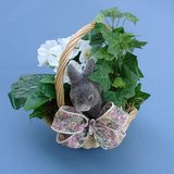 PRIMROSE, IVY & BUNNY RABBIT BASKET ARRANGEMENT in Batavia, Illinois